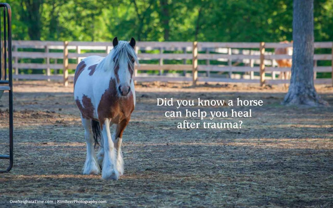 How a horse can help you heal after trama
