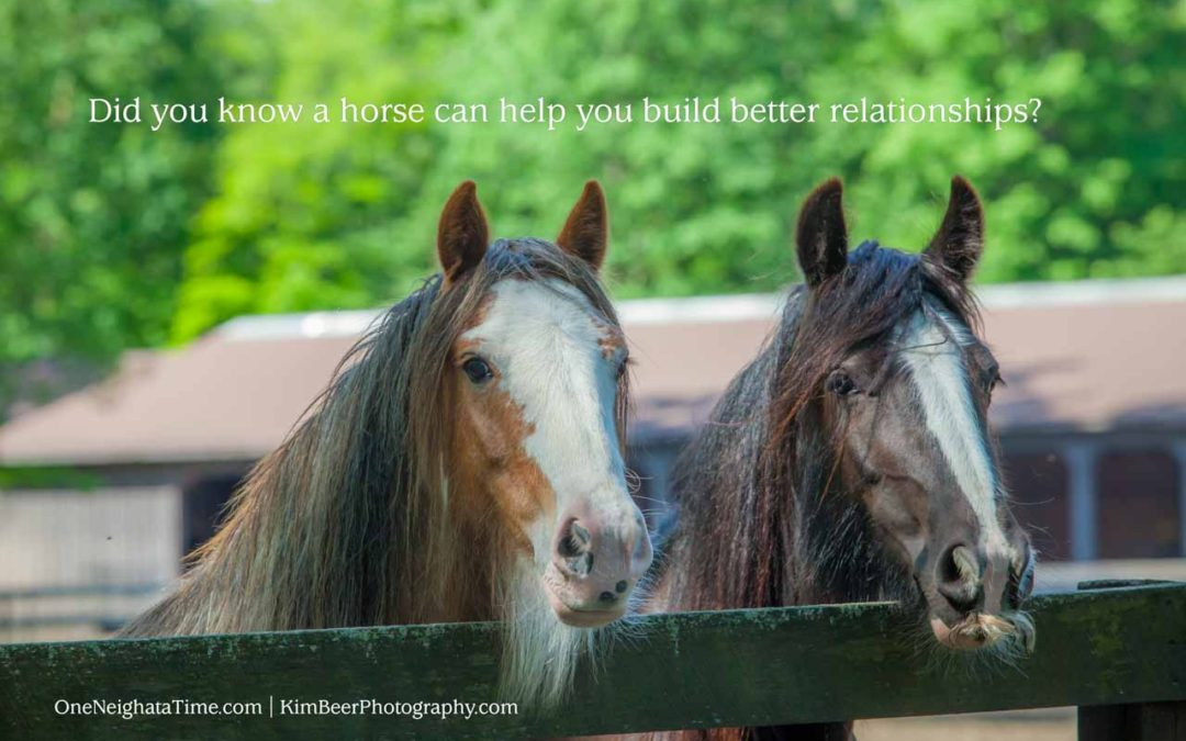How can a horse help you build better relationships?