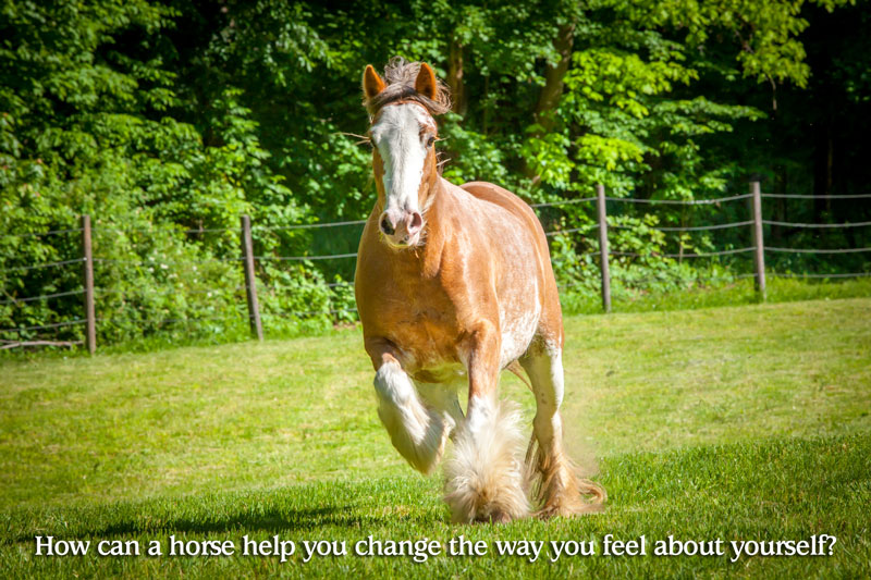 How can a horse help you change the way you feel about yourself?