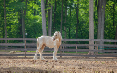 How Can A Horse Help You Make Big Decisions?