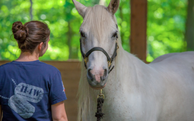 How Can A Horse Heal Your Spirit?