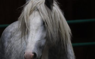 How a Horse Can Help You Hear Your Intuition