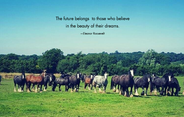 How does a horse help you build your dreams?