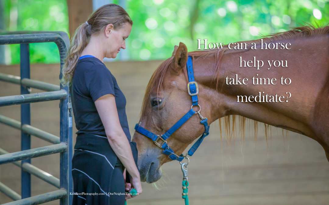 How can a horse help you meditate?