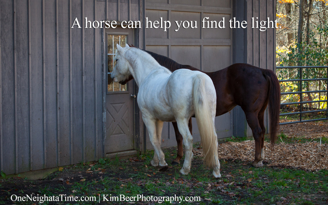 A horse can help you find the light.