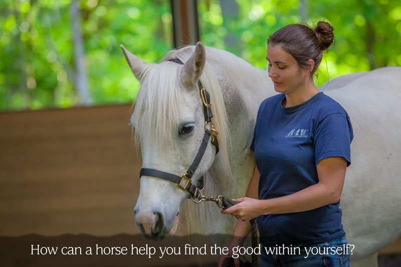 How can a horse help you find the good within yourself?
