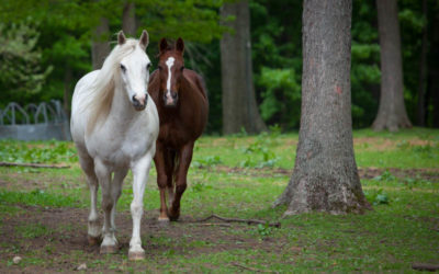 Do You need an Equine Medication?